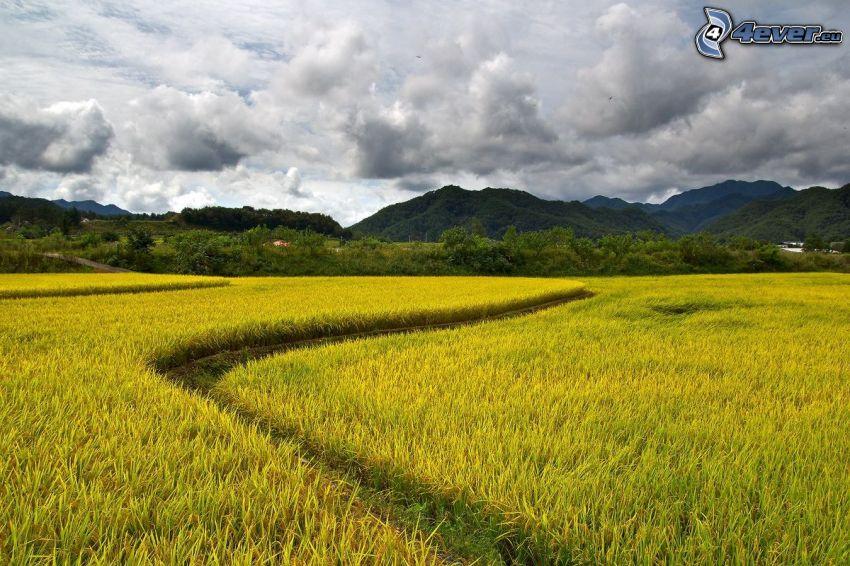 field, path, hills, clouds
