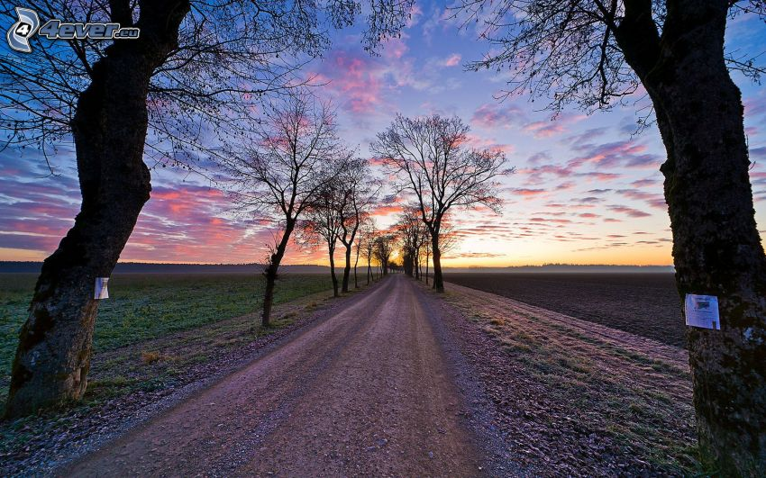 field path, avenue of trees, sky, field