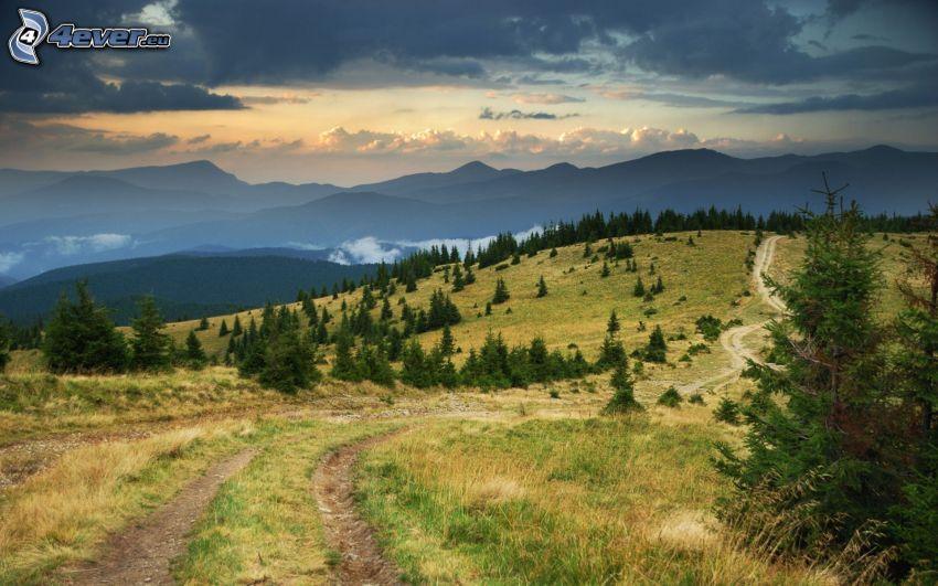 field path, coniferous trees, mountain
