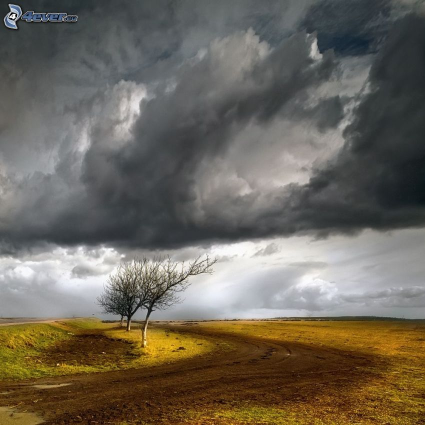 field path, defoliate tree, storm clouds