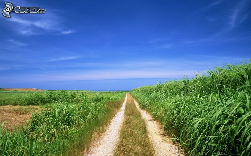 field path, fields