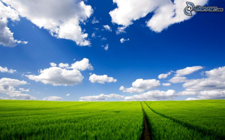 field path, green cornfield, clouds, blue sky