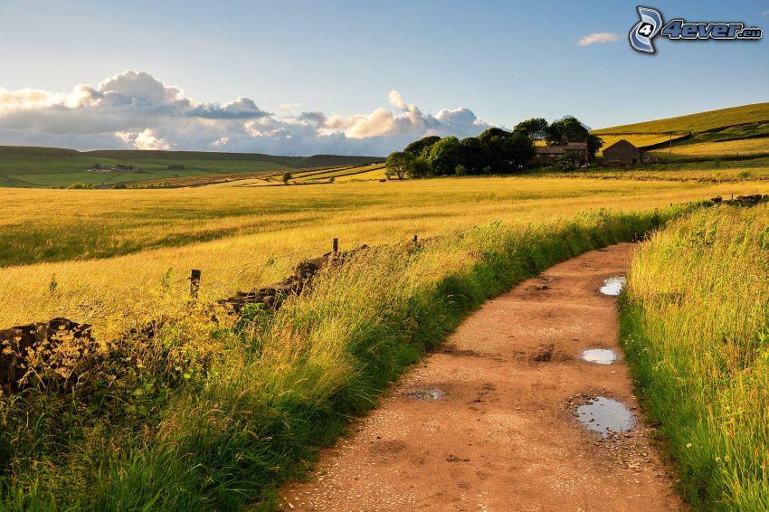 field path, green grass