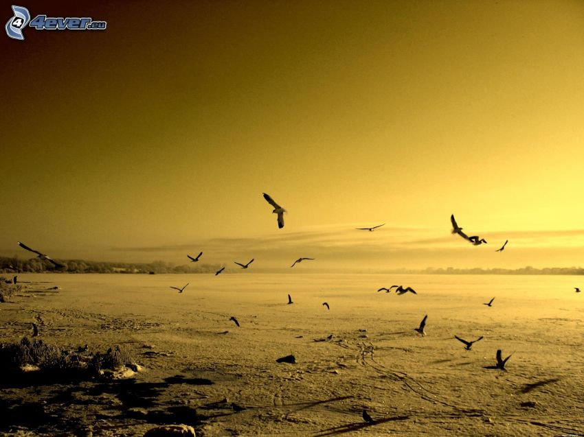 flock of birds, yellow sky