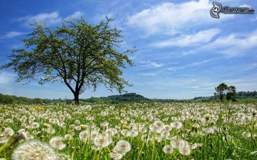 flowering dandelions, tree