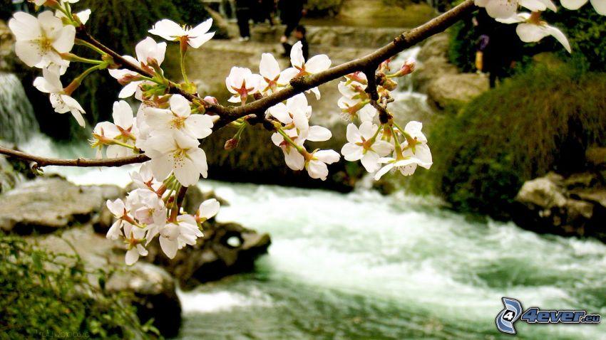 flowering twig, River