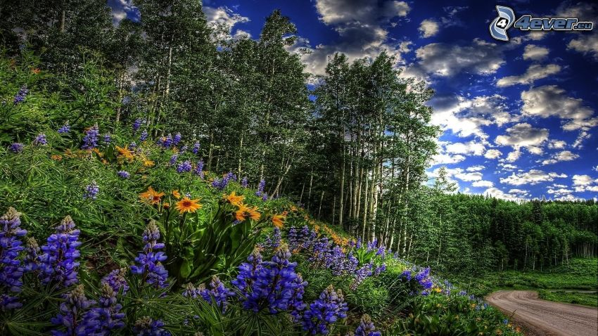 flowers, trees, clouds