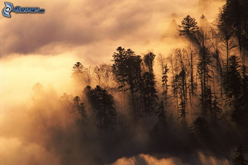fog in forest, clouds