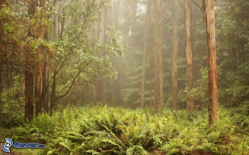 forest, ferns