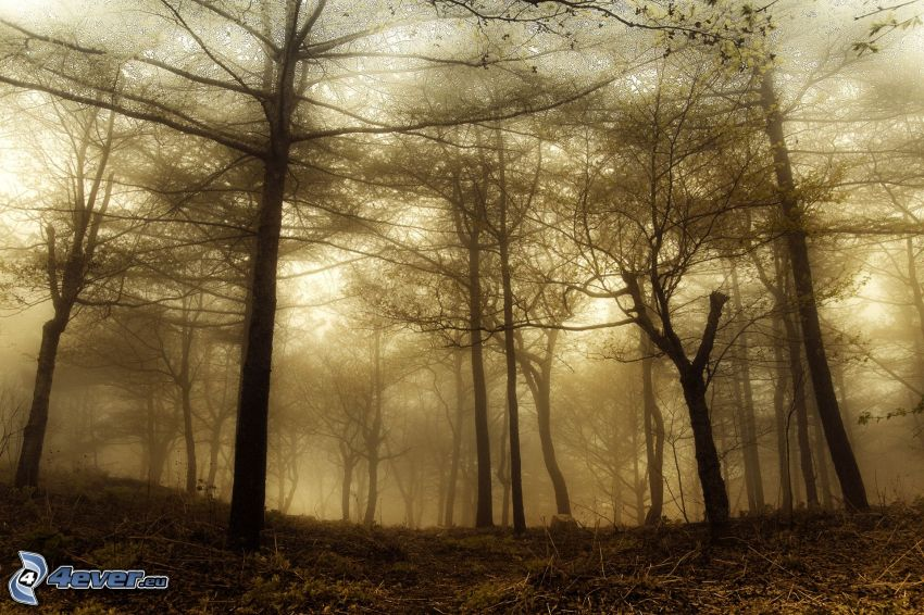 forest, fog, sepia