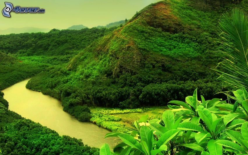 forest, hill, River, greenery