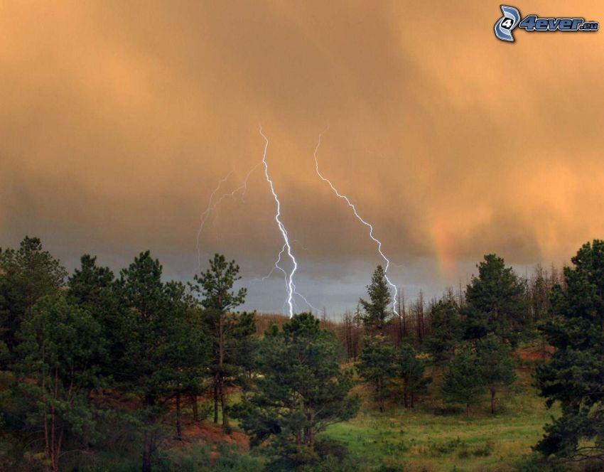 forest, lightning