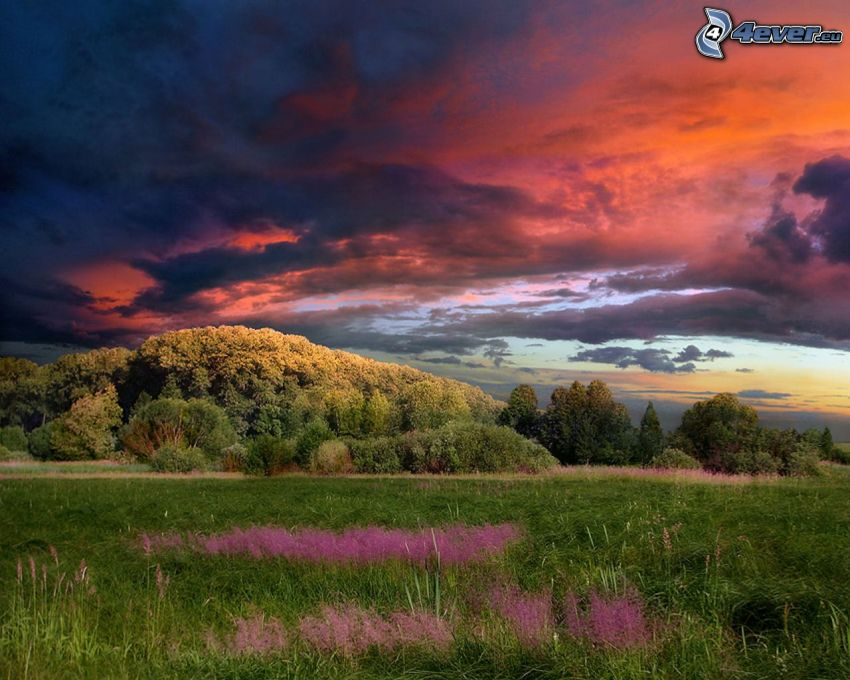 forest, meadow, evening sky