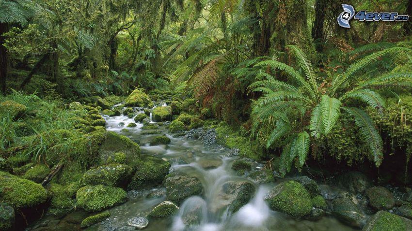 forest, stream, greenery