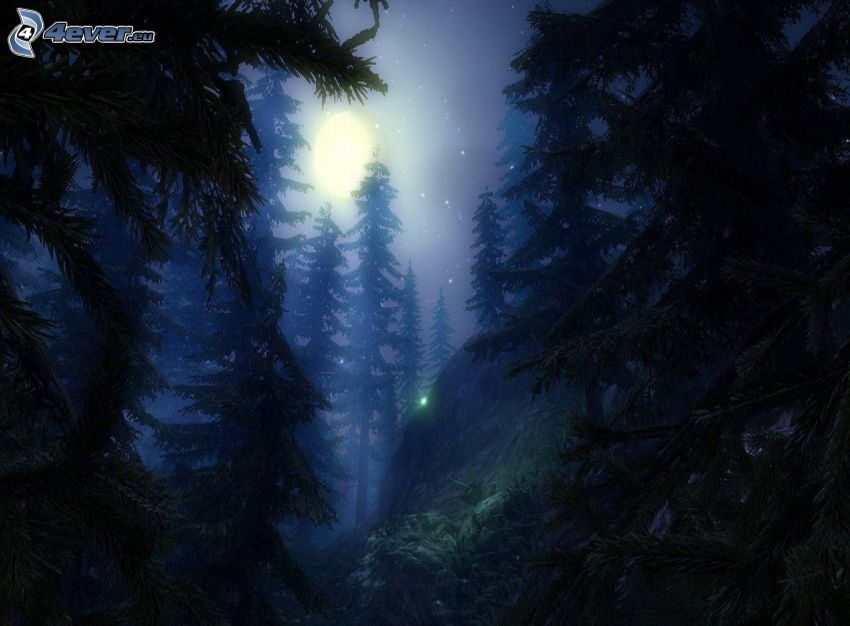 forest at night, coniferous trees, moon