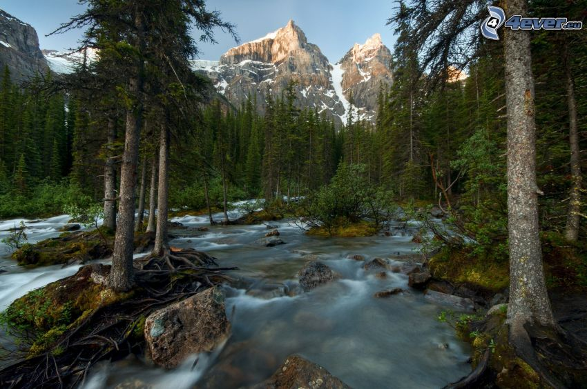 forest creek, coniferous forest, rocky mountains