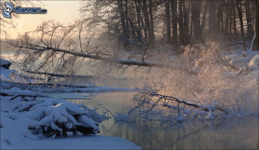 forest creek, tree, snow
