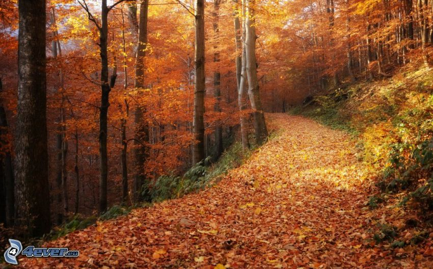 forest path, autumn forest, yellow trees