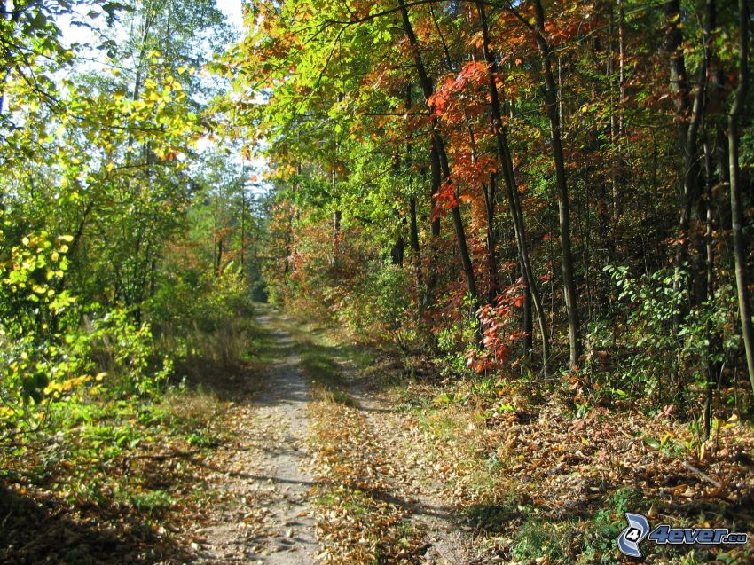forest path, autumn forest