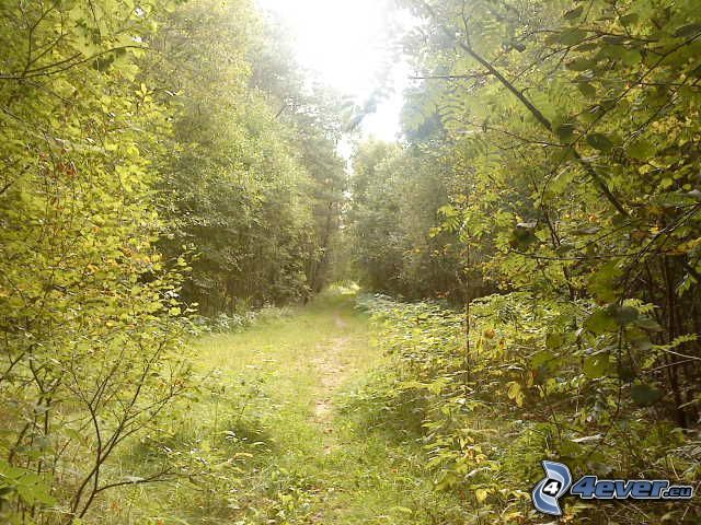 forest path, greenery