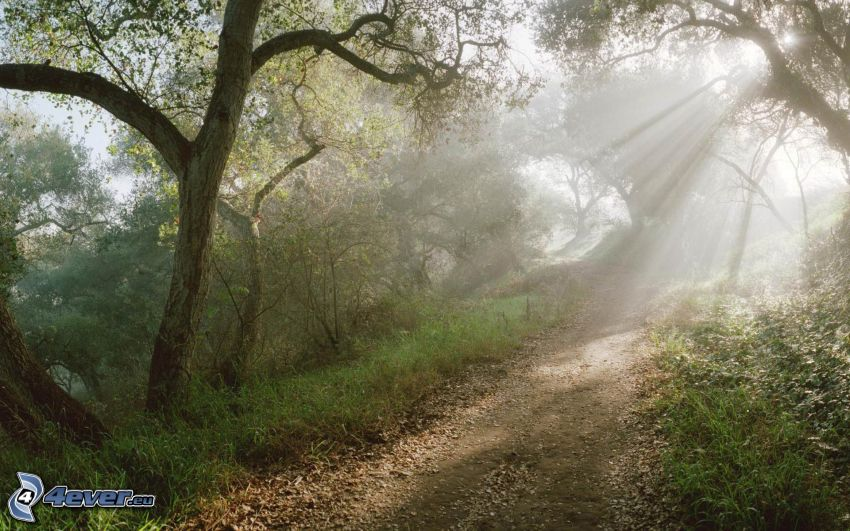 forest road, sunbeams, trees