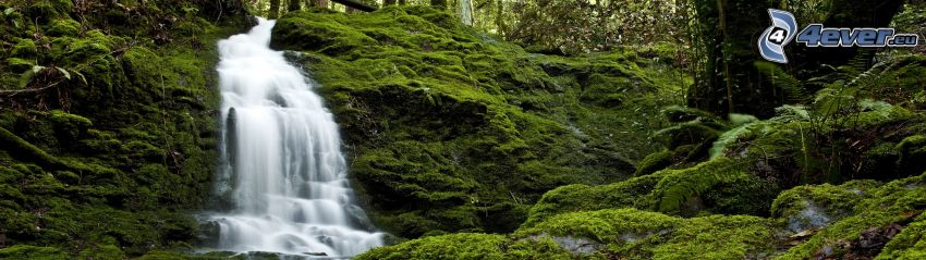 forest waterfall, greenery