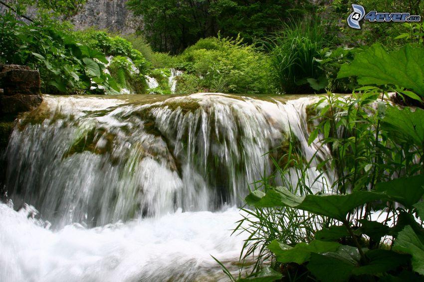 forest waterfall, greenery