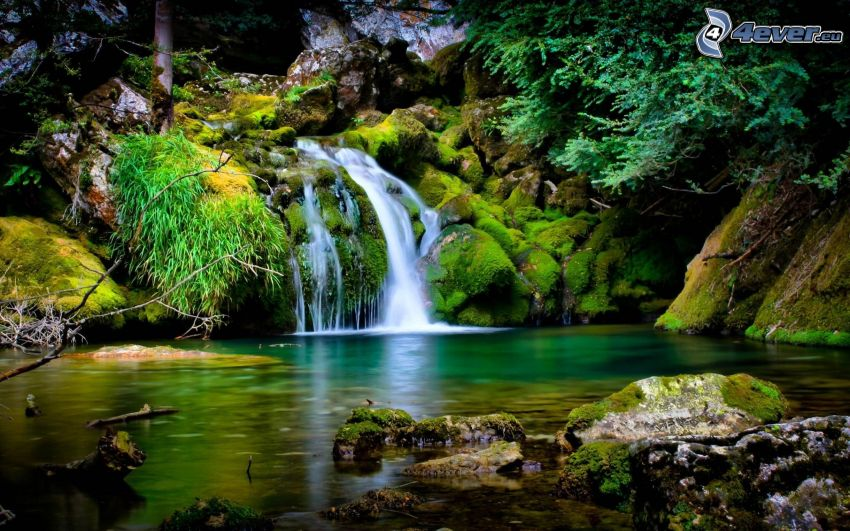 forest waterfall, lake in woods, greenery