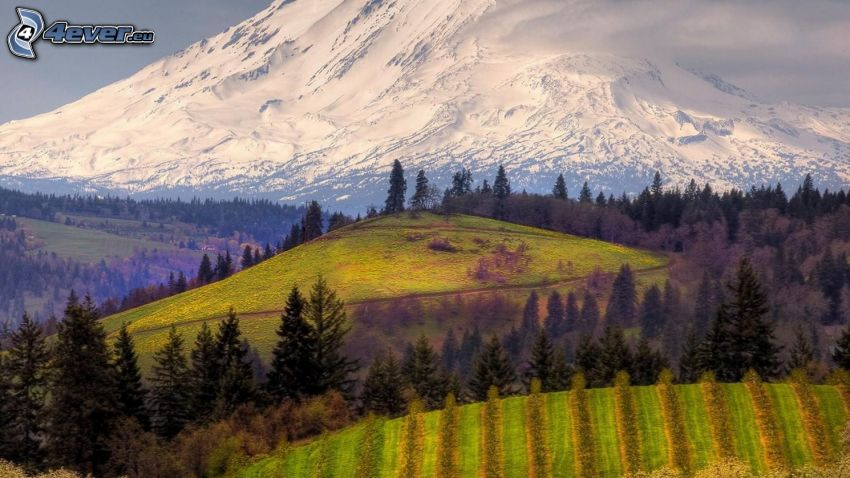 forests and meadows, Mount Adams, snowy hill