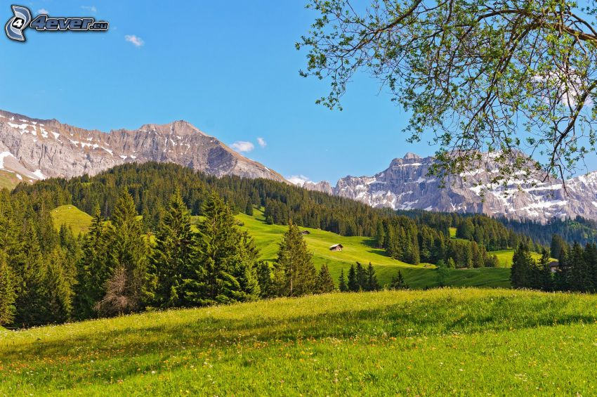 forests and meadows, mountain, Switzerland