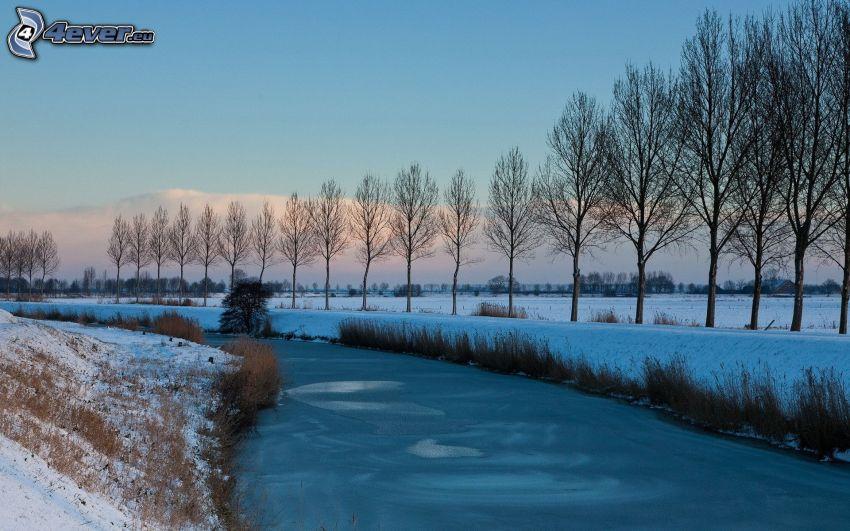 frozen creek, tree line