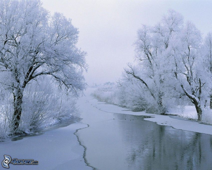 frozen river, snowy trees