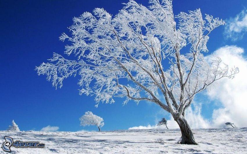 frozen tree, snow