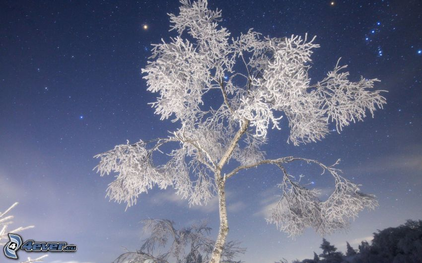 frozen tree, starry sky