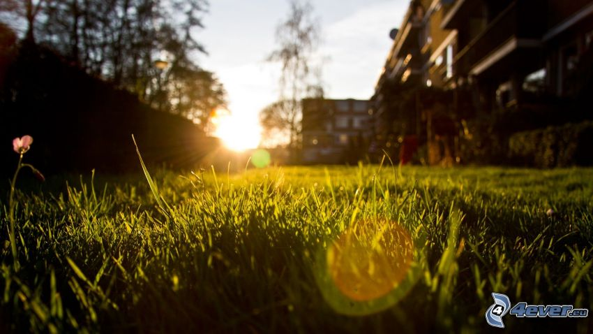 grass at sunset, buildings