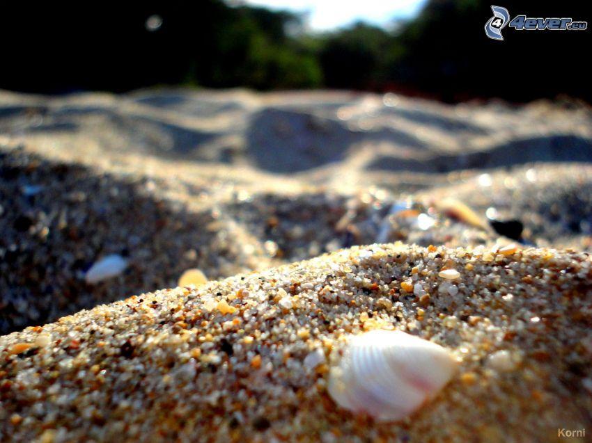 gravel, shell, forest