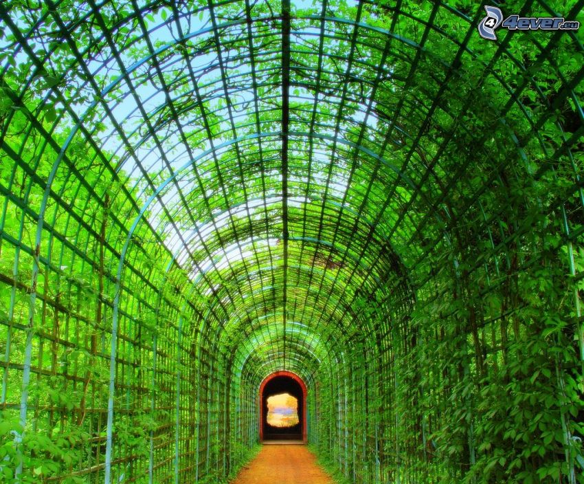 green tunnel, gate