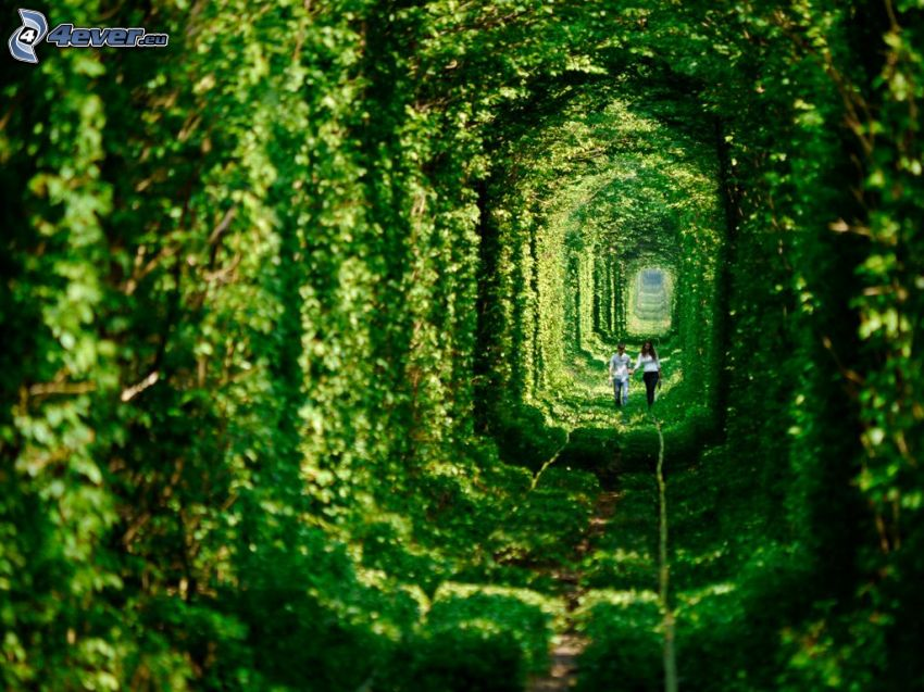 green tunnel, rails, couple