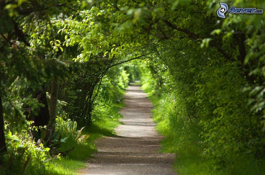 green tunnel, sidewalk, green trees