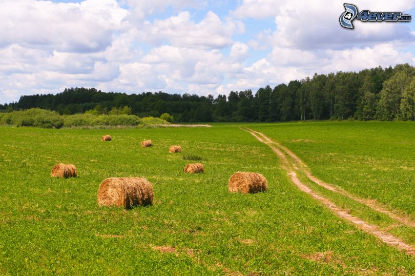 hay after harvest, field, field path, forest