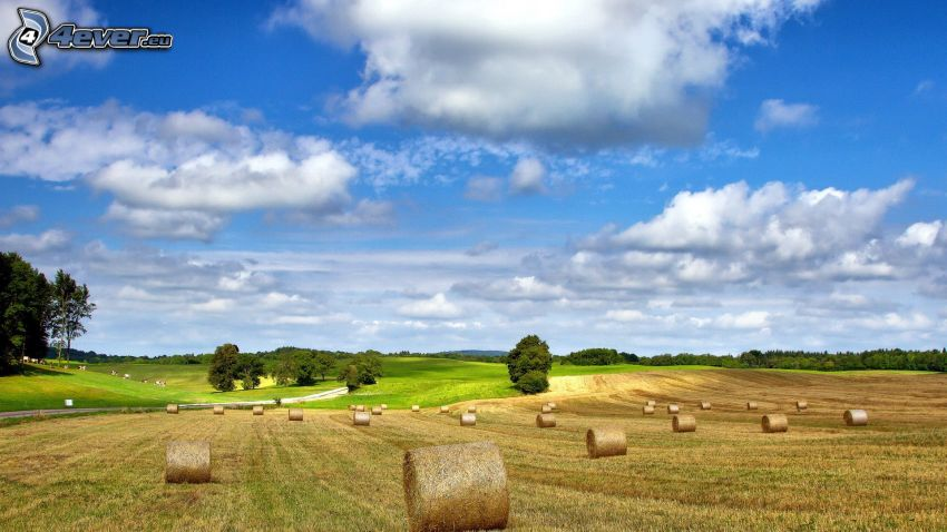 hay after harvest, field path, clouds