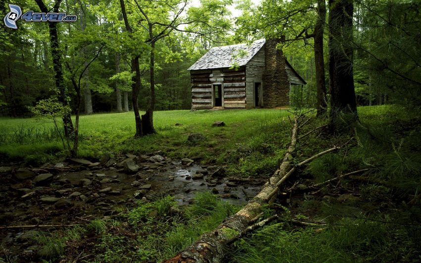 house, forest, forest creek, trees, grass