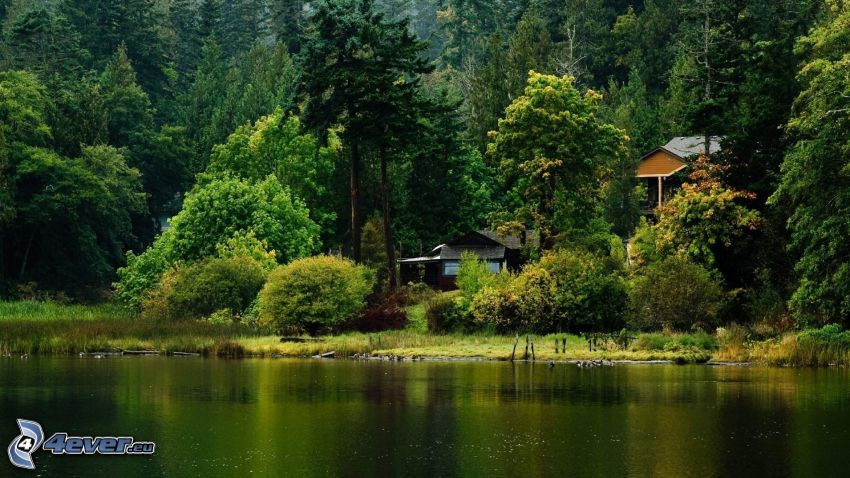 house by the lake, forest