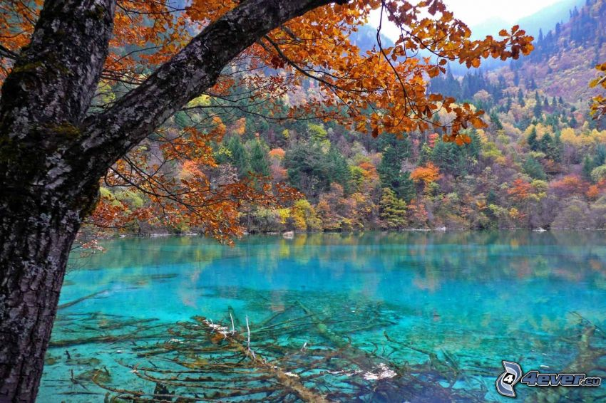Jiuzhaigou, azure lake, autumn forest
