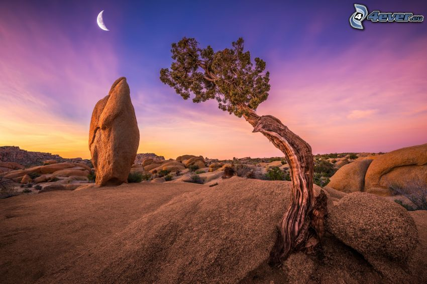 Joshua Tree National Park, tree, rocks, moon