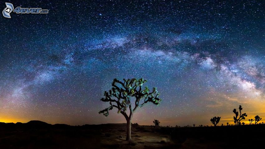 Joshua Tree National Park, trees, night sky, starry sky
