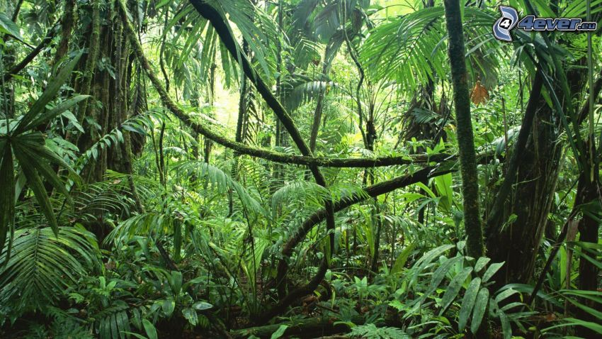jungle, forest, greenery