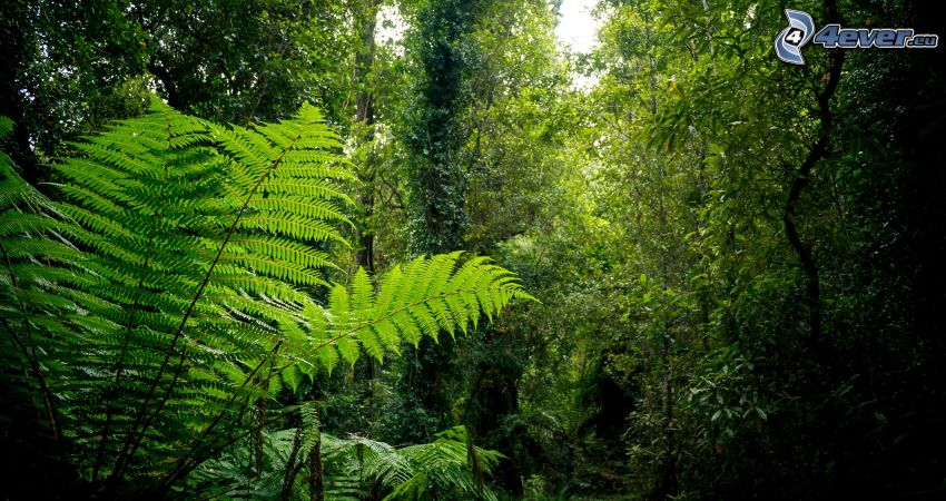 jungle, greenery, ferns