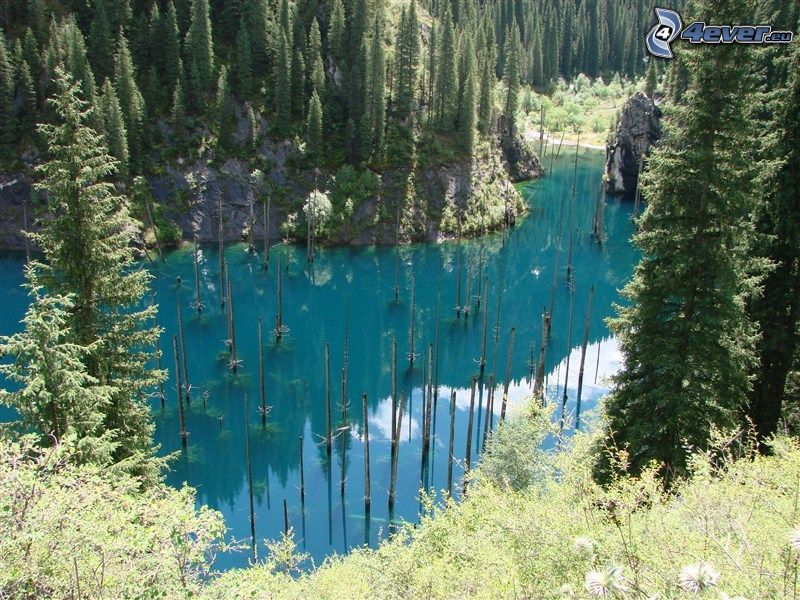 Kolsai Lakes, coniferous forest