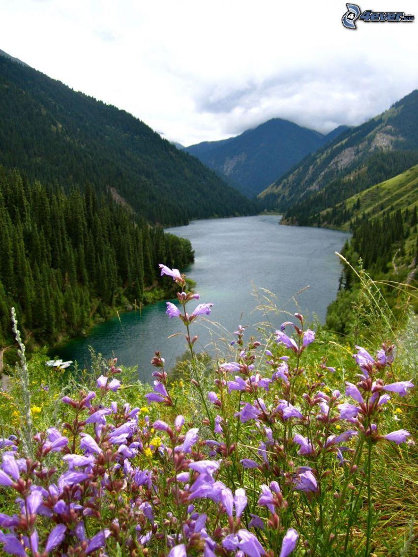 Kolsai Lakes, hills, purple flowers